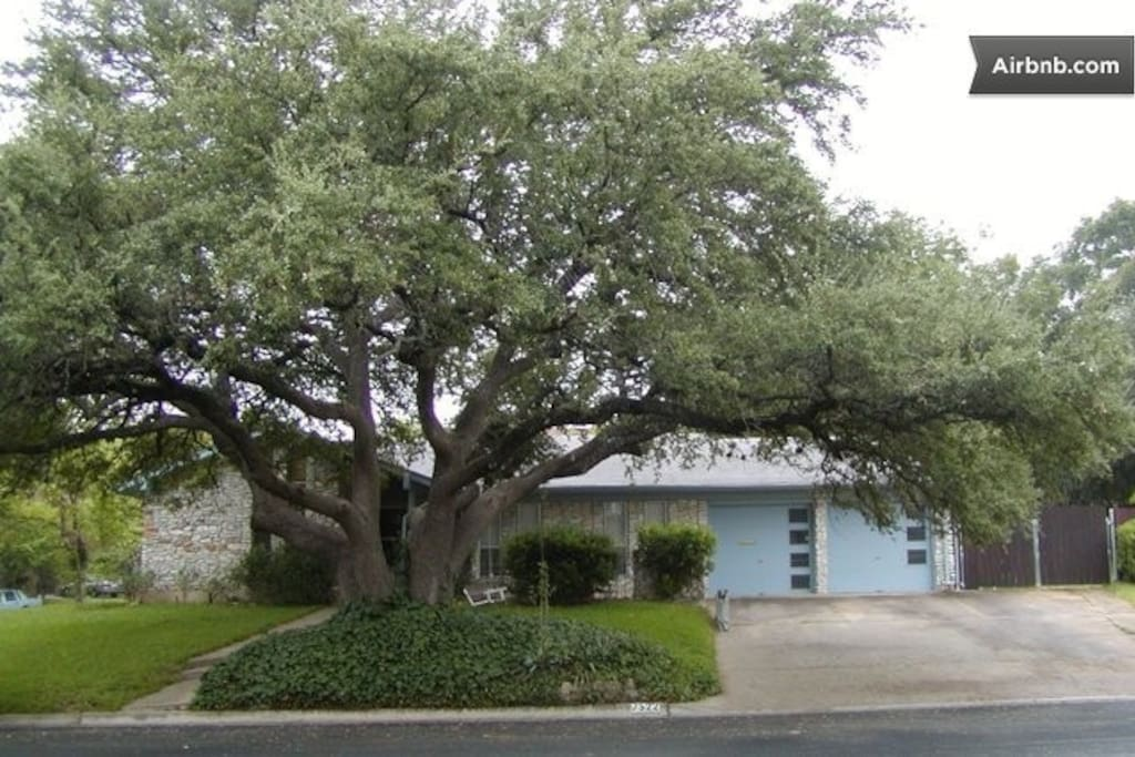 A 350 year old Live Oak welcomes you out front