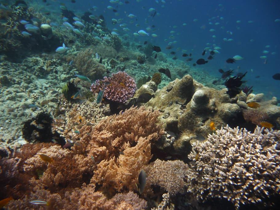 Underwater shot of really good snorkeling area not far from Secret Island Resort called Gili Layar: Snorkel Mania