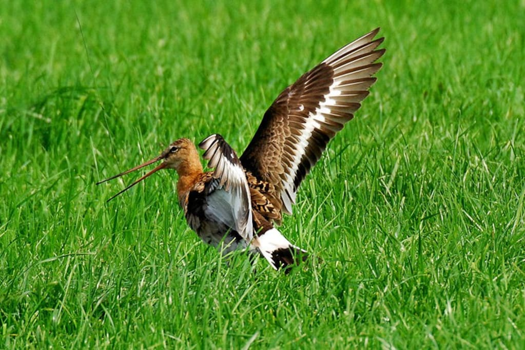 Weidevogels op ons terrein.