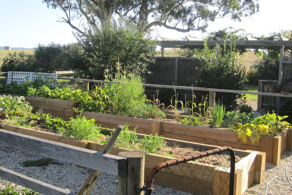 Dig in the vegetable garden