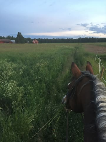Bo på hästgård med sjöutsikt!