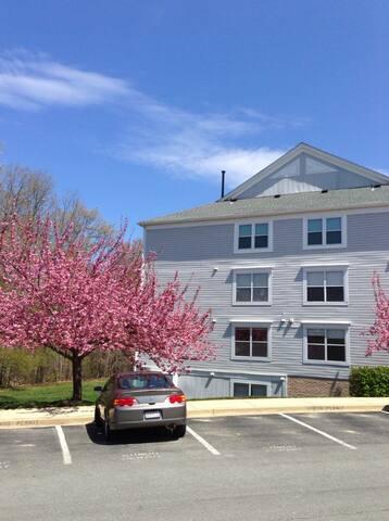 1 bedroom w/shared bath5/20-8/20/16 - Rockville - Apartment