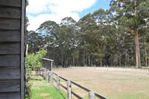 Looking off the side of the porch to our karri forest