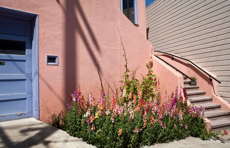 The snapdragons are in bloom out front!