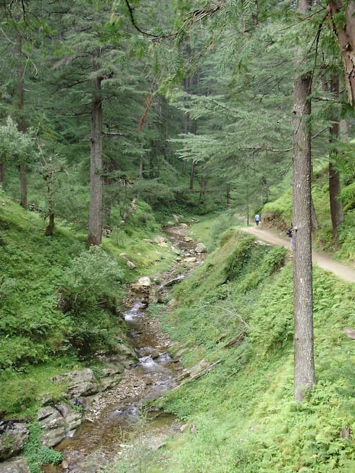 Way to lodge from jageshwar