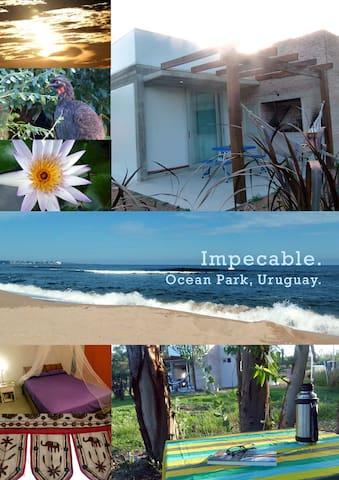 Hermosa y calida casa  cerca del mar - Ocean Park - Appartement