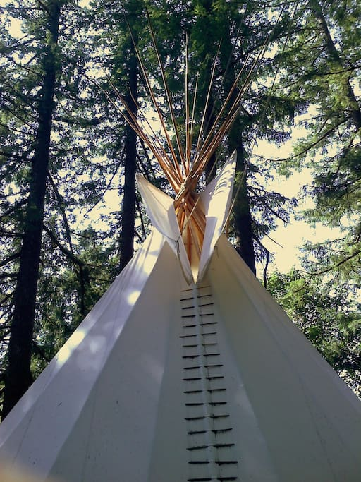 This shows the crown of Crazy Horse, our 30ft group tipi, surrounded by our tallest trees.