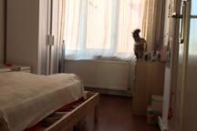 Flat, Cat sitter Discount