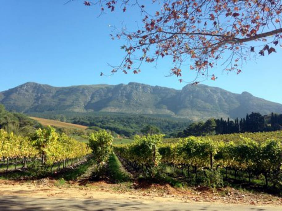 The Constantia Valley is a short drive from Table Mountain, beaches, the City Bowl and downtown Cape Town