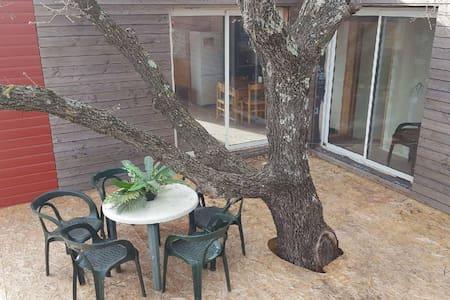 Maison et terasse autour d'un chêne