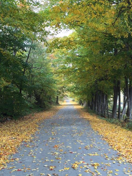 Three Maple Drive