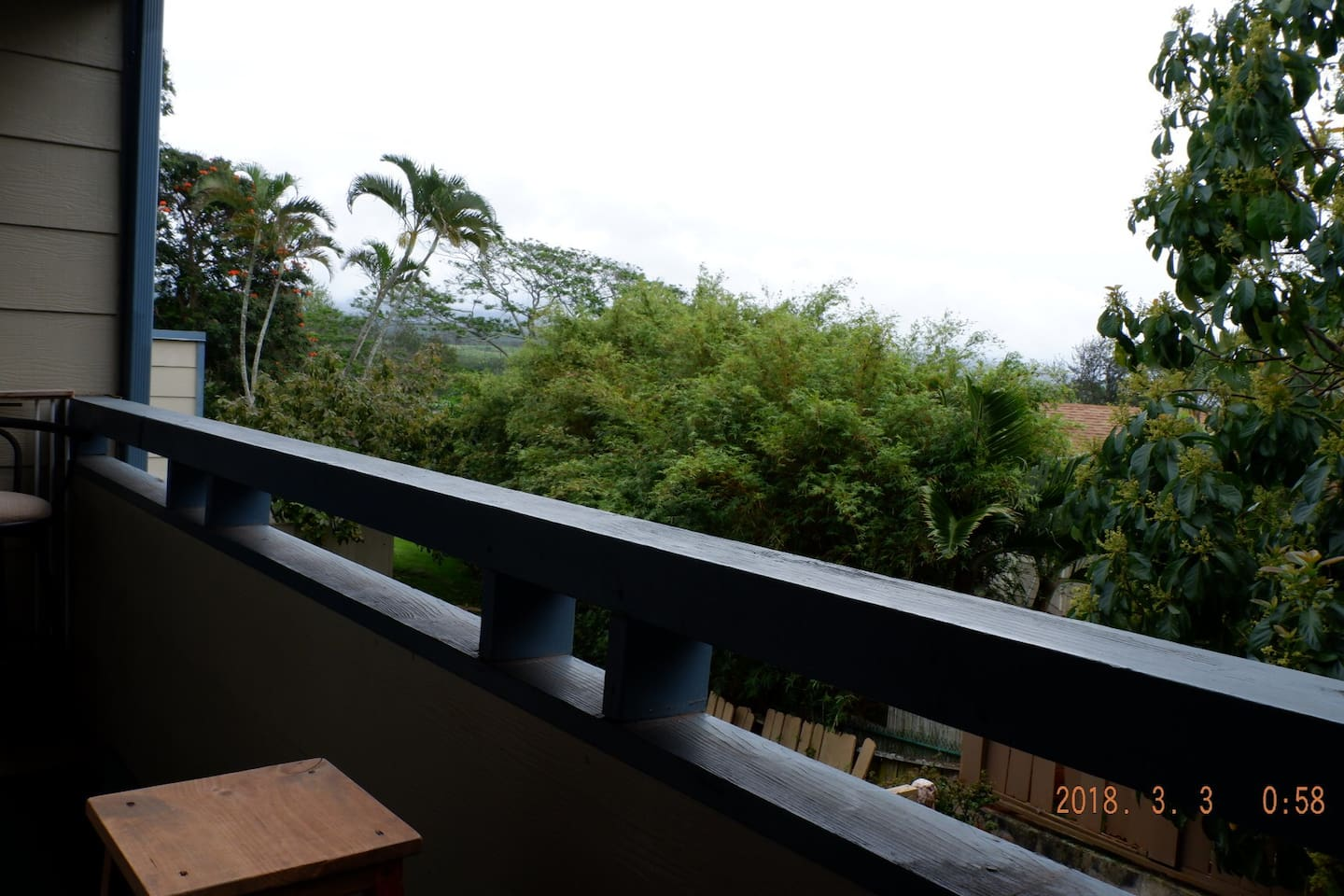 The beautiful view from the balcony, better on sunny days for green parrots flying around and visiting the bird feeder
