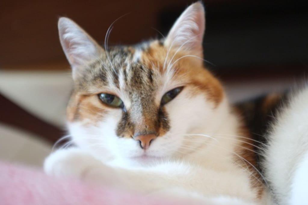 Das ist Lucy, unsere goldige 11-jährige Katzendame. Lucy gehört zur Wohnung und sollte mit Liebe und Freude gehütet und gefüttert werden. Lucy geht via Katzentürli rein und raus.