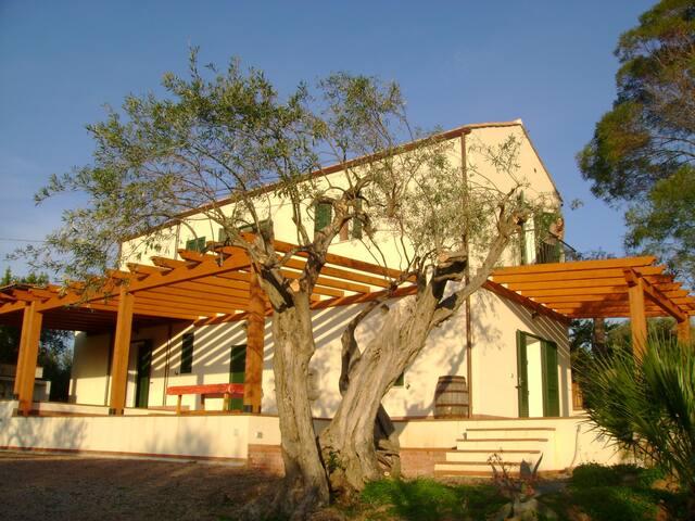 Flat To Rent Villa degli Ulivi (A1) - Cefalù - Apartment
