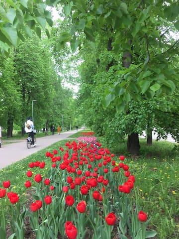 Kibalchicha boulevard with cycle lane outside.