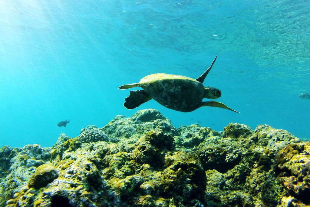 Snorkel with Turtles right in the tropical waters right in front of our Ha'ena Hideaway home!!