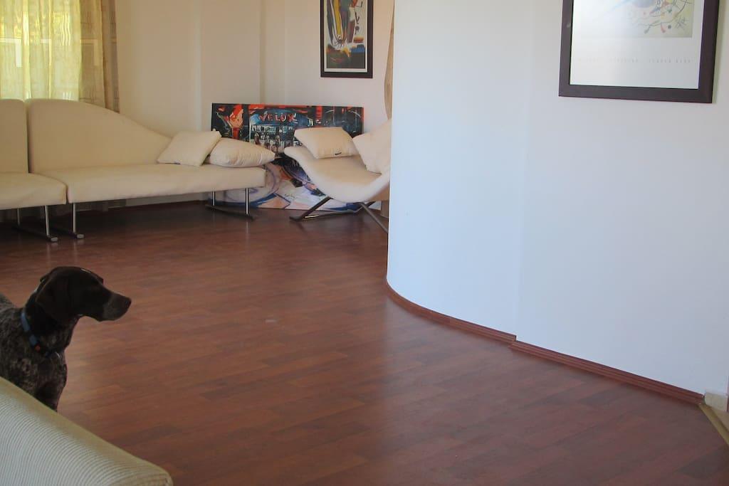 Salonun diğer kısmı ve köpeğimiz Poyraz...