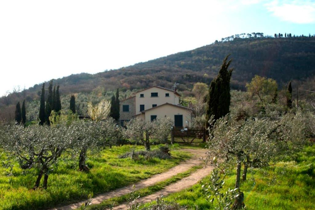 Oliveto e giardino, sullo sfondo la collina di Sepoltaglia