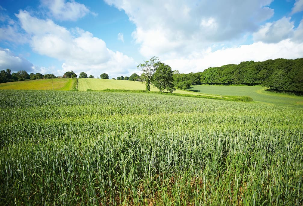 Sunny south west facing views across farmland and privately owned woodland
