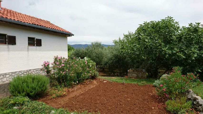 Small house in an olive grove - Polje