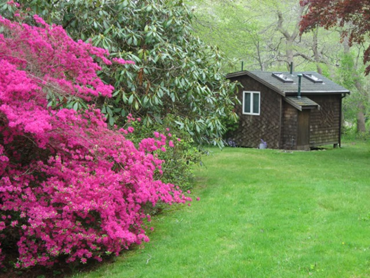 A view of the cottage as you walk down the lawn with azaleas in full bloom (May).