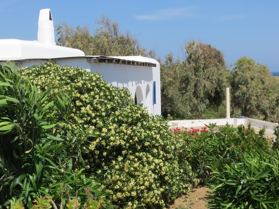 The mediterranean vegetation