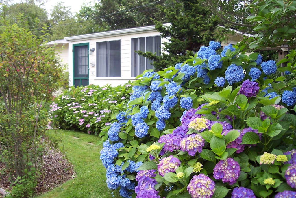 Flowering gardens.  There is a deck on the side of the cottage.
