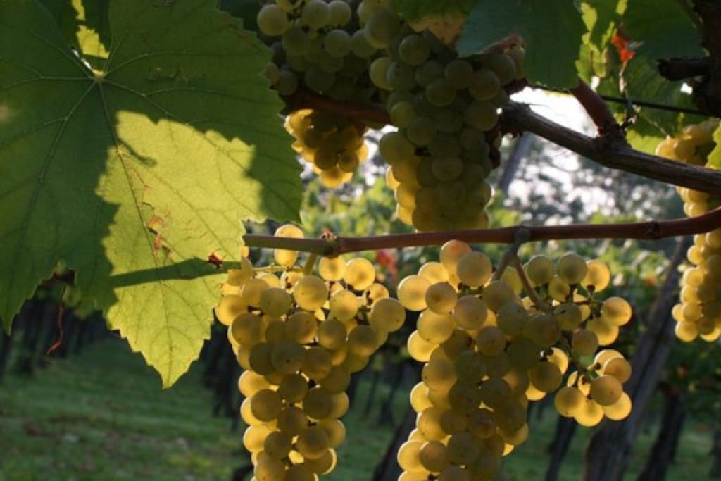 Welcome to sttember wine in Franciacorta