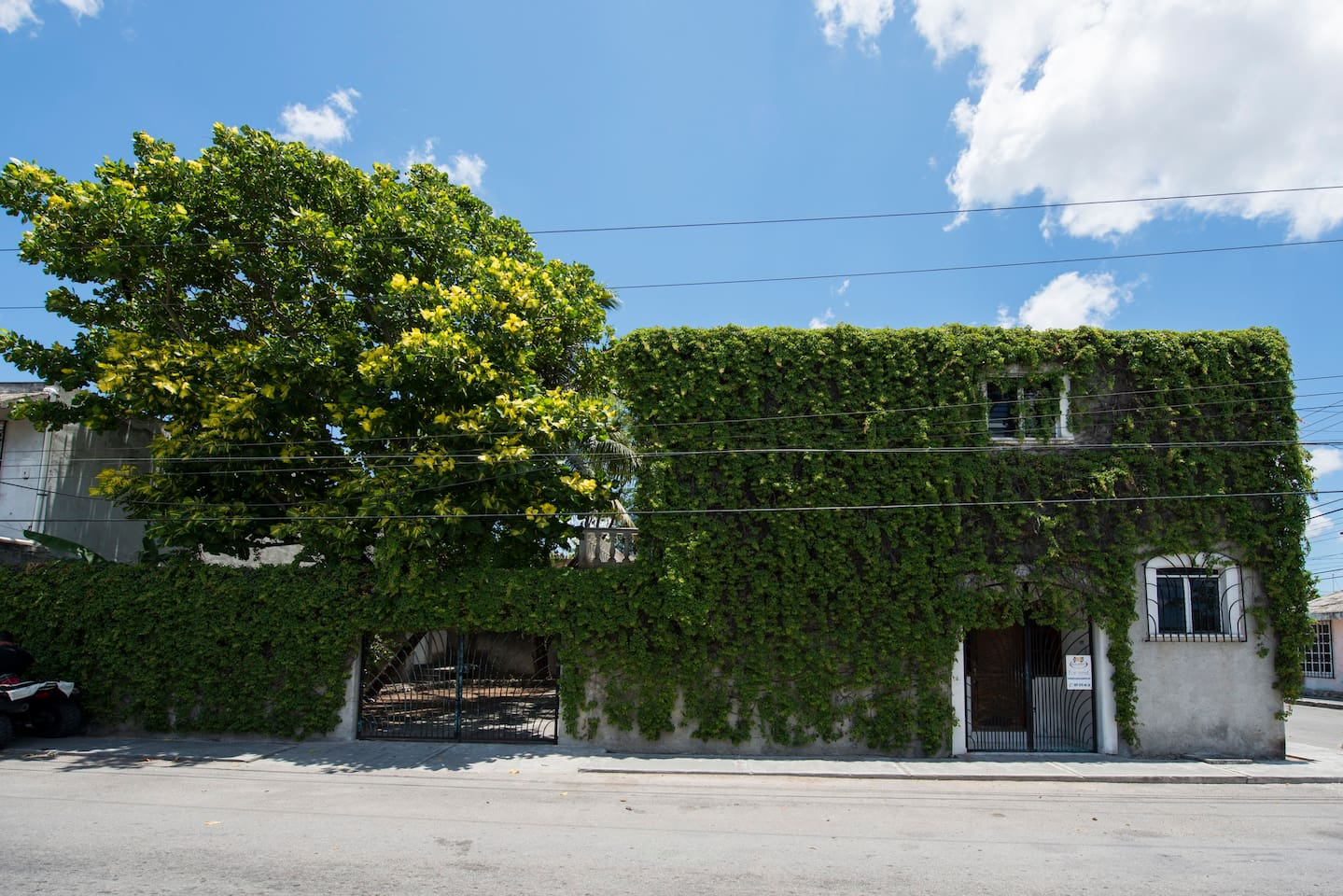 "The ""green vine"" exterior"