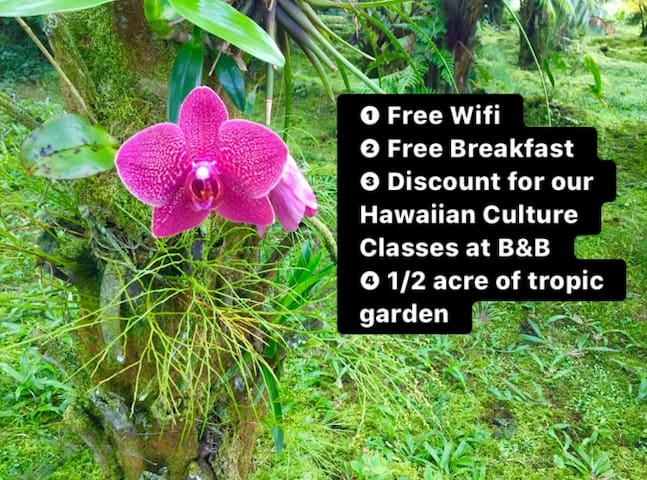 4 Reasons to choose our B&B. Get discount for our Airbnb Experience by booking 2 nights or more!