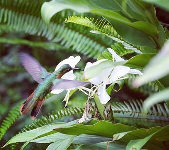 The Hummingbird Hostel (Room Josefina) Tzununa - Lake Atitlán