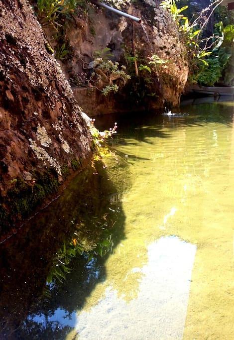 Lago ornamental - Água de nascente