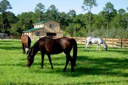 Enjoy the Florida Sunshine, Country Style!