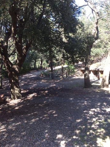 Collina vista mare, Castiglioncello, Volterra,