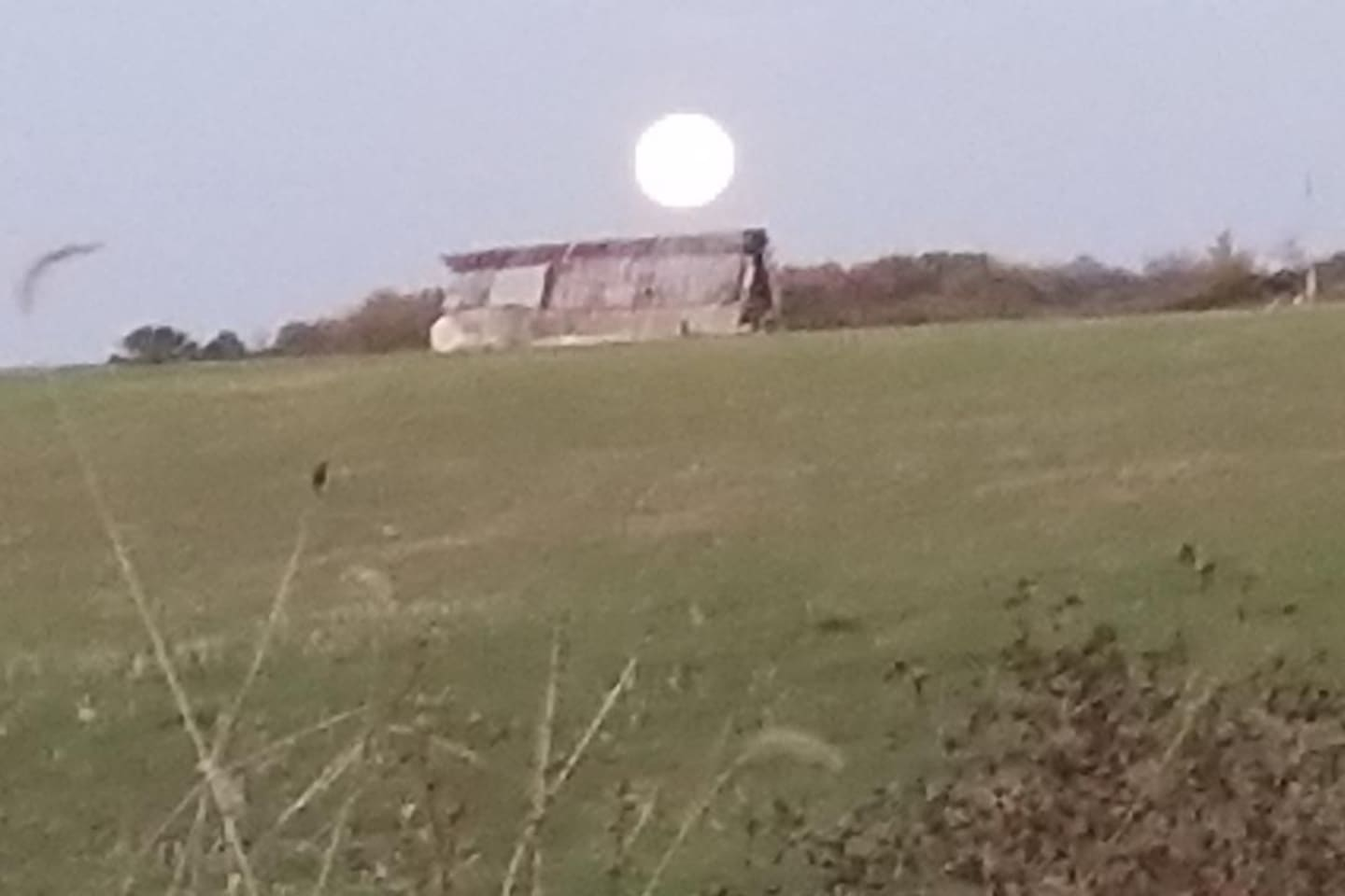 Moon. rise over old cattle barn, no more cattle. Just an old wood barn . Reclaiming the timber .