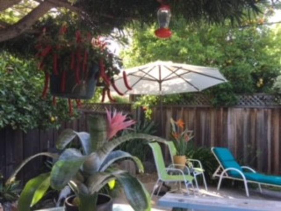 Backyard plants