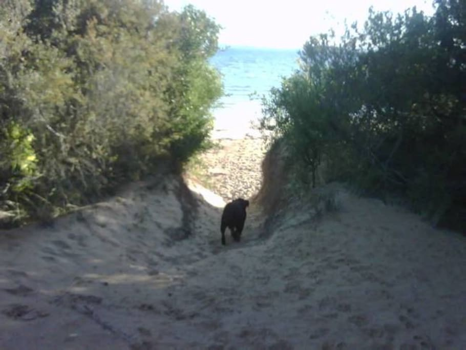 The track to the dog friendly beach is opposite our house
