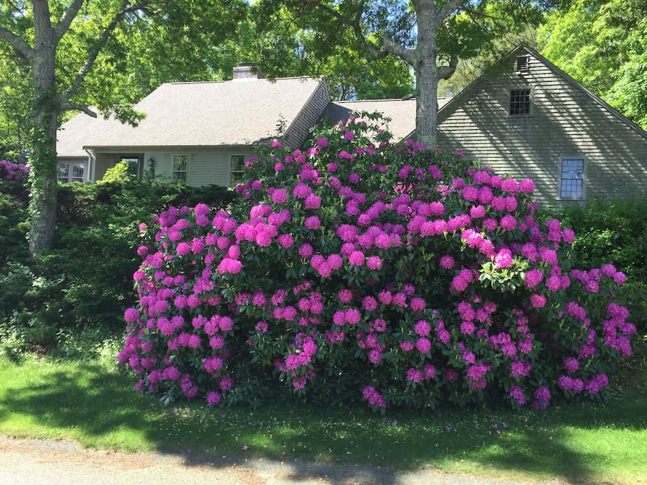 Front of my home in bloom