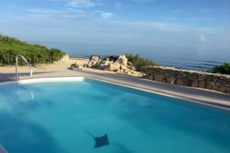 The Copper Turtle:  ocean, pool, butterflies, joy!