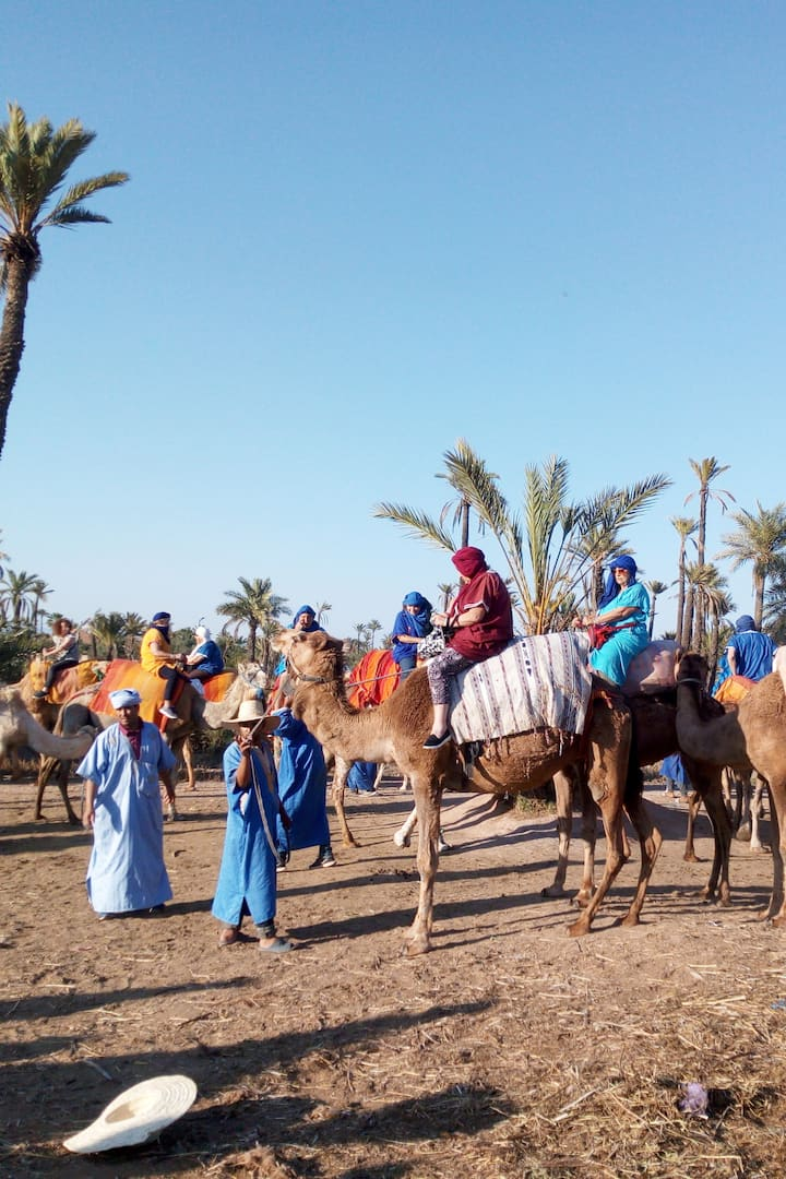 Camel Riding on the palm grove