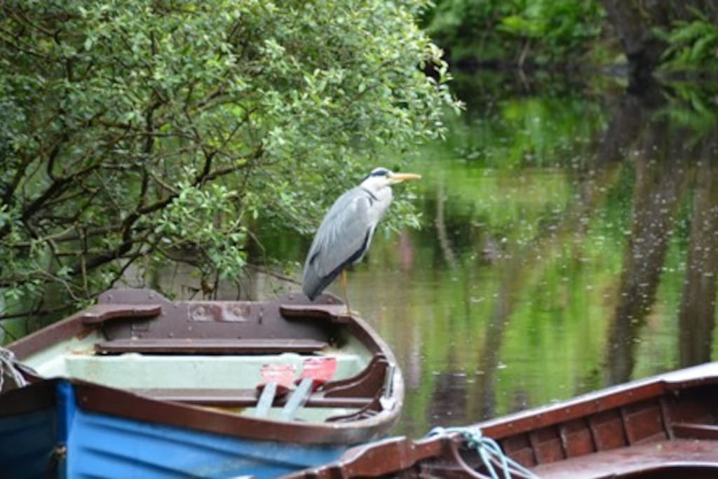Heron on one of our Boats