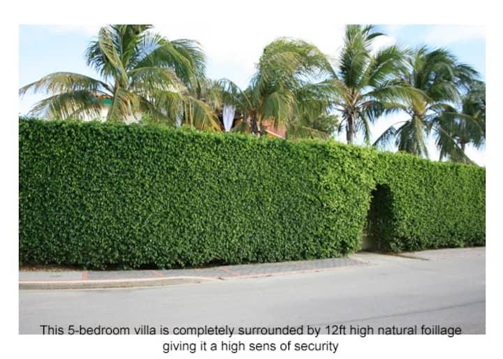 5kr Villa met zwembad/jacuzzi in Palm Beach Aruba