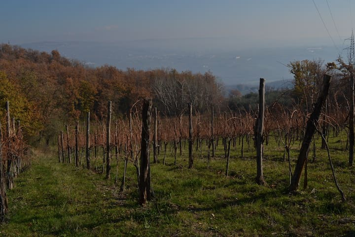 Property vineyard