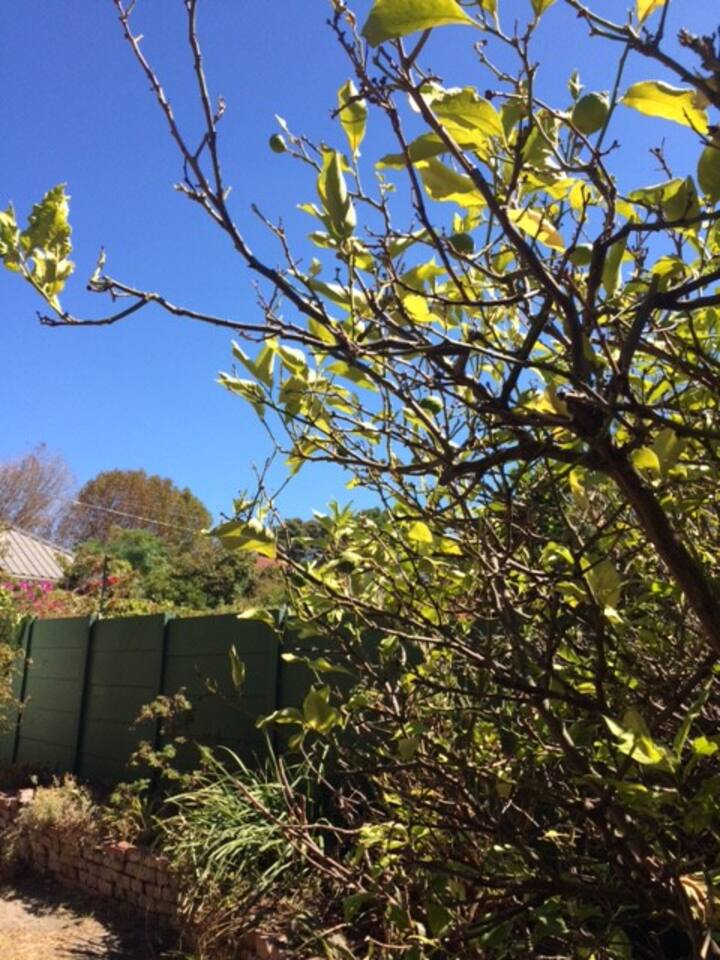Sunny & Quiet, Aloe Studio Garden Cottage