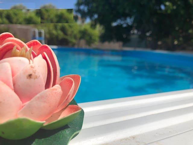 dietro la piscina c'è un'area relax con cheeslounges sparsi sotto al fico