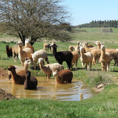 Crookwell Alpaca Farm bnb