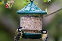 Plentiful Birdlife in the Garden.