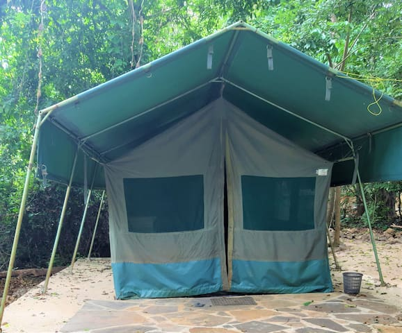 Forest Tent 4