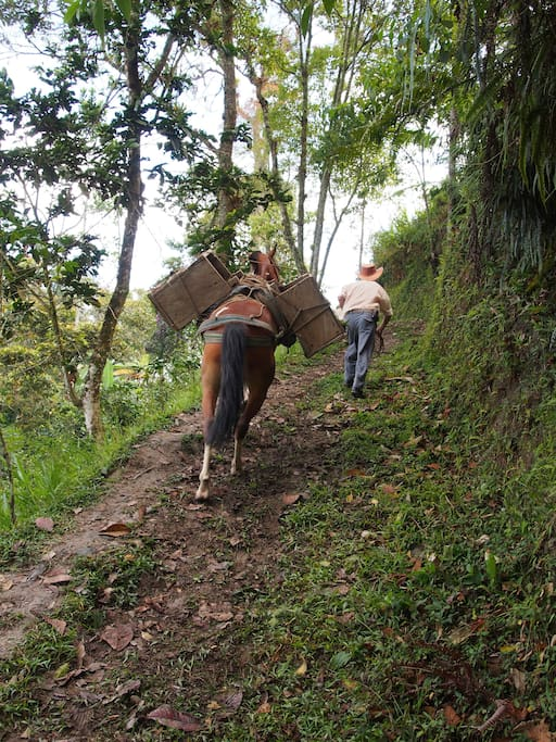 Horses help farmers to carry their goods.