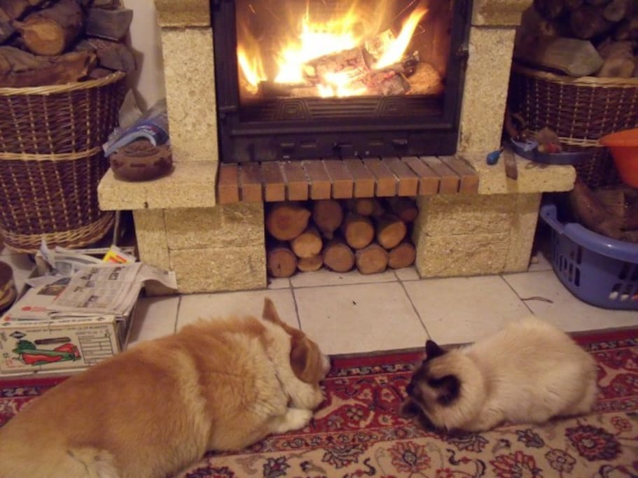 Two of the animals enjoying the fire